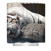 Playful Tiger Shower Curtain