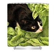 Playful Tuxedo Kitty In Green Tissue Paper Shower Curtain