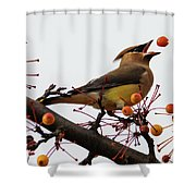Playing Catch Shower Curtain