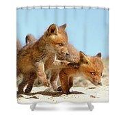 Playing Fox Kits Shower Curtain