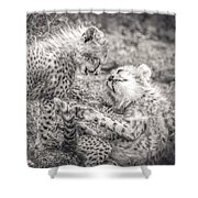 Playtime In Africa- Cheetah Cubs Acinonyx Jubatus Shower Curtain