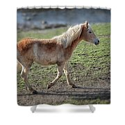 Playtime Is Over  2534 Shower Curtain