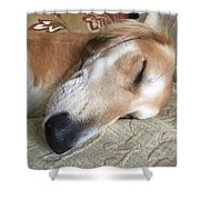 Please Be Quiet. Saluki Shower Curtain