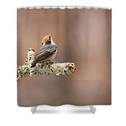 Please Stop The Rain - Brown-headed Nuthatch Shower Curtain