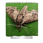 Plebeian Sphinx Moth Shower Curtain