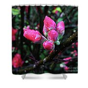 Plum Blossom 1 Shower Curtain