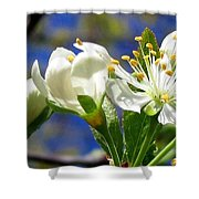 Plum Blossoms Shower Curtain