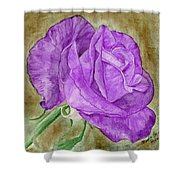 Plum Passion Rose Shower Curtain