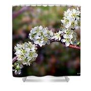 Plum Tree Blossoms Shower Curtain