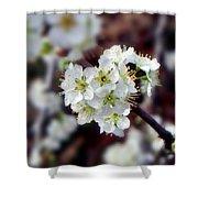 Plum Tree Blossoms II Shower Curtain