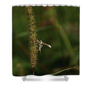 Plume Moth Shower Curtain