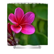 Plumeria - Royal Hawaiian Shower Curtain