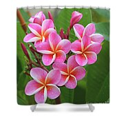 Plumeria After The Rain II Shower Curtain