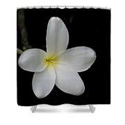 Plumeria Blossom Shower Curtain