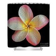 Plumeria Flower On Black Shower Curtain