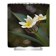 Plumeria II Shower Curtain