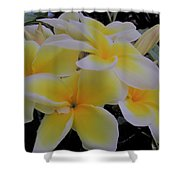 Plumeria In Yellow 4 Shower Curtain