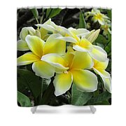Plumeria In Yellow  5 Shower Curtain