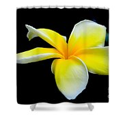 Plumeria In Yellow Shower Curtain
