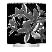 Plumeria Proper Evening Shower Curtain