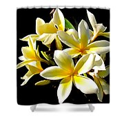 Plumeria Proper Shower Curtain