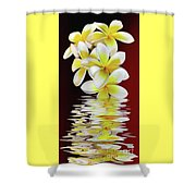 Plumeria Reflections By Kaye Menner Shower Curtain