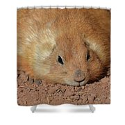 Plump Resting Prairie Dog Laying Down Shower Curtain