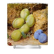 Plums And A Rose Hip On A Mossy Bank Shower Curtain