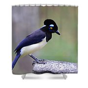 Plush Crested Jay Shower Curtain