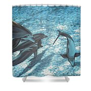 Pod Of Dolphins Shower Curtain