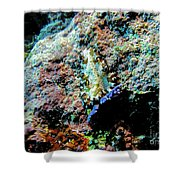 Pohnpei Flatworm Shower Curtain