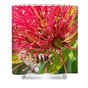 Pohutukawa Flower  Shower Curtain
