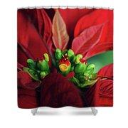 Poinsetta Shower Curtain