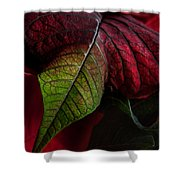 Poinsettia Shower Curtain