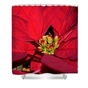 Cyathia Shower Curtain