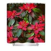 Poinsettia Christmas Shower Curtain