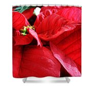 Poinsettia In Bloom Shower Curtain