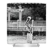 Point Clear Alabama Brown Pelican - Bw Shower Curtain