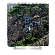 Point Lobos Veteran Cypress Tree Shower Curtain by Charlene Mitchell