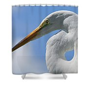 Pointed Curves Shower Curtain