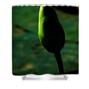 Poised For Greatness Shower Curtain