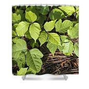Poison Oak Vine - Toxicodendron Shower Curtain