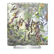 Pokeberry Light Shower Curtain