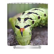 Pokemon In Real Caterpie Shower Curtain