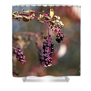 Pokeweed Berries 20121020_129 Shower Curtain