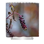 Pokeweed Berries 20121020_134 Shower Curtain