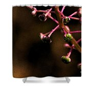 Pokeweed Emerges - Wc Shower Curtain