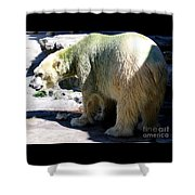 Polar Bear 2 Shower Curtain