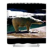 Polar Bear 3 Shower Curtain