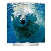 Polar Bear Contemplating Dinner Shower Curtain